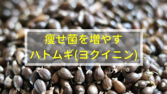 痩せ菌を増やすのにおすすめの漢方はハトムギ(ヨクイニン)