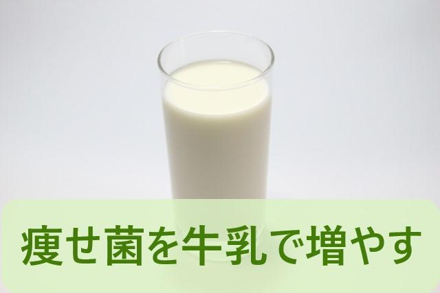 痩せ菌を牛乳で増やす