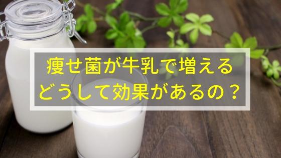 痩せ菌が牛乳で増える!どうして効果があるの?