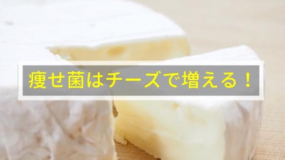 痩せ菌はチーズで増える!