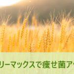 バーリーマックス大麦