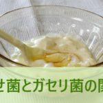 痩せ菌とガセリ菌の関係