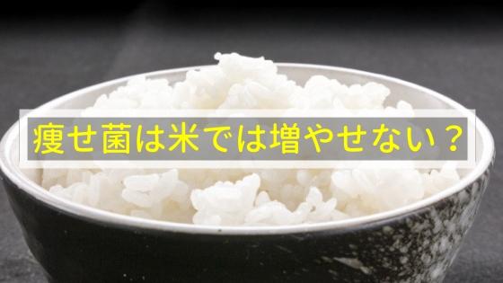 痩せ菌は米では増やせないの!?