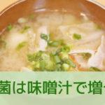 痩せ菌 味噌汁